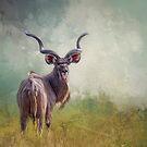 Kudu. von Lyn Darlington