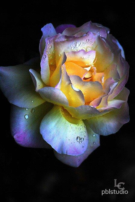 Flower by pblstudio