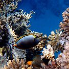 Exciting Moment In The Red Sea Underwater World by hurmerinta