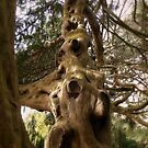 The Tree. by Finbarr Reilly