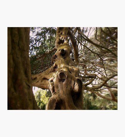 The Tree. Photographic Print