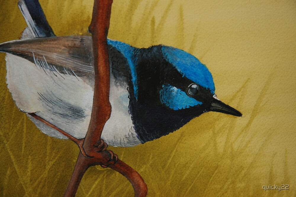 blue wren by quicky22