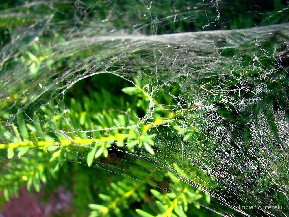 Web in the sun by Tricia Stucenski