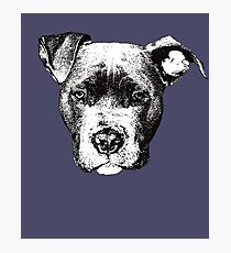American Pit Bull - Pit Bull Christmas Gifts Photographic Print