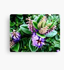 Ireland In Bloom Canvas Print