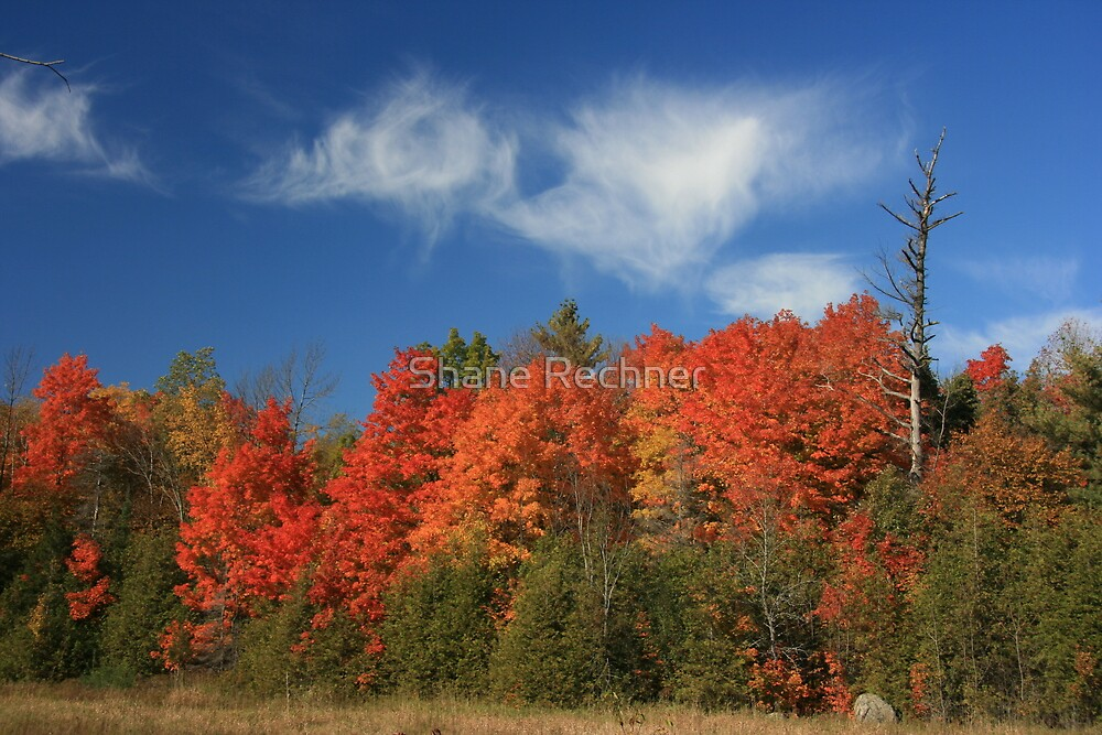 Fall Colors - Kingston, Ontario by Shane Rechner