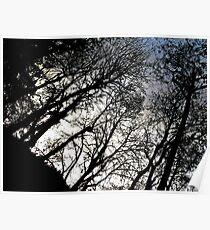 treetops Poster