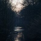 As the light fades. by throughapinhole