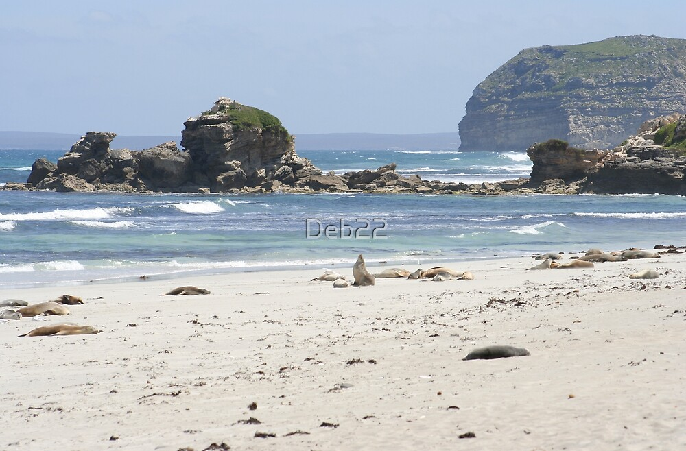 Australian sea lions at Seal Bay, South Australia by Deb22