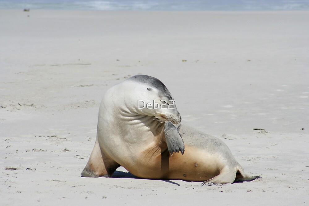 Sea lion at Kangaroo Island, South Australia by Deb22