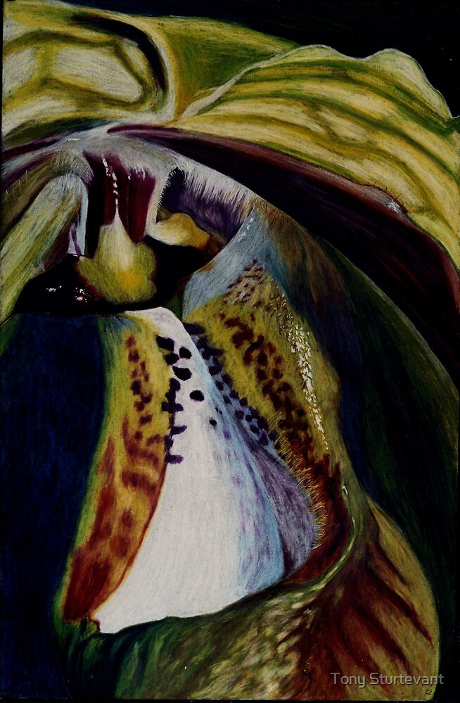 Rare Orchid 2 by Tony Sturtevant