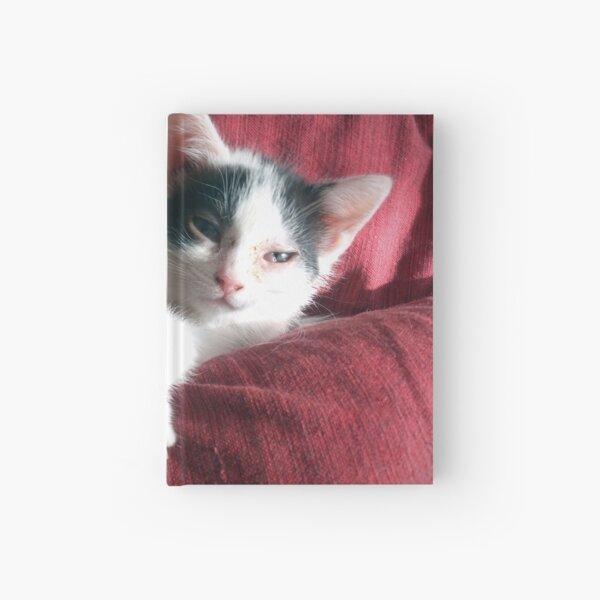 Katze in Rot Notizbuch