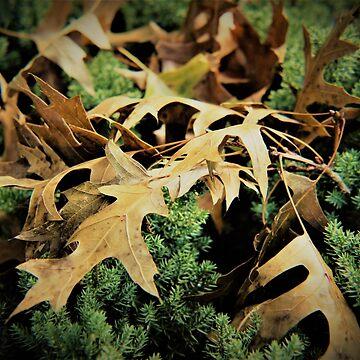Autumn music of leaves by oirisha