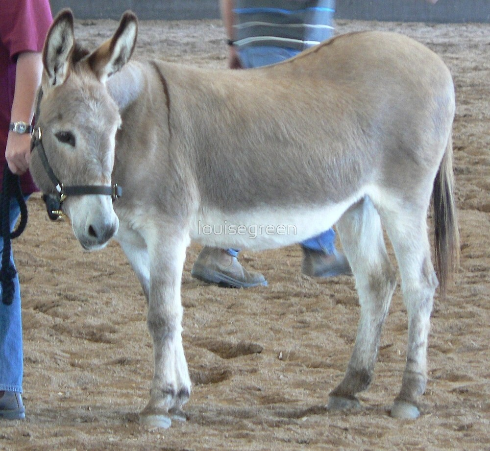 Jenny Donkey - Tocal by louisegreen
