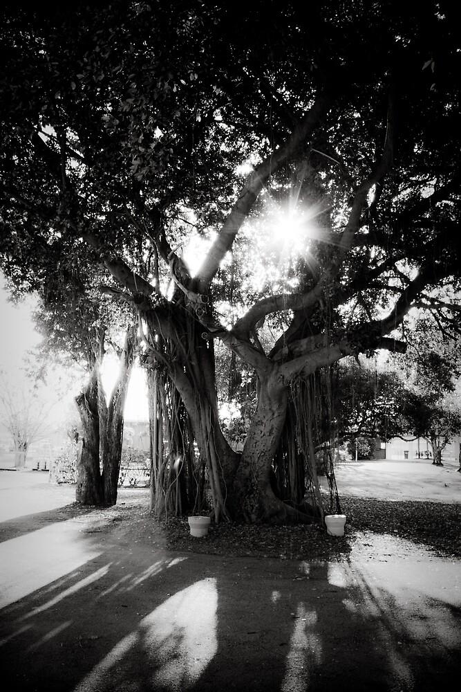 Tree Light by Amy Adams