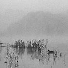 misty morning by nadine henley