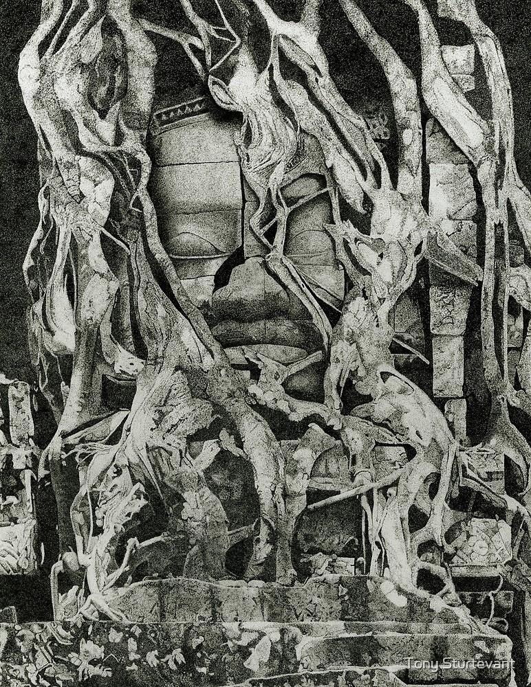 Angkor Wat by Tony Sturtevant