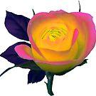 wundervoll leuchtende Rose von rhnaturestyles