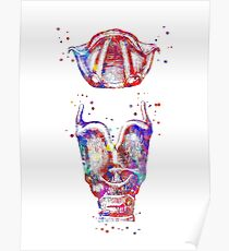 Larynx, larynx and vocal cord, watercolor larynx, mouth anatomy Poster