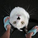 Hershey and slippers by JaimeWalsh
