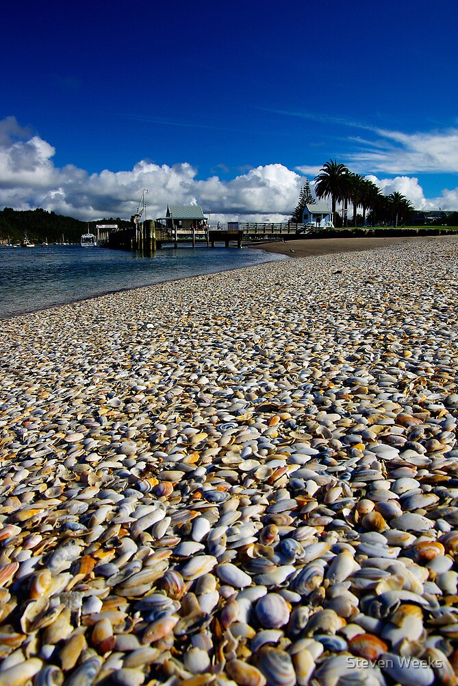 Shells on the beach by Steven Weeks