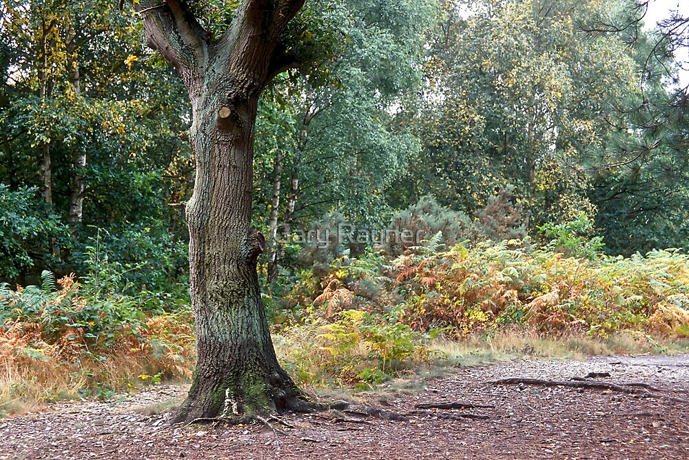 Oak on the Heath by Gary Rayner