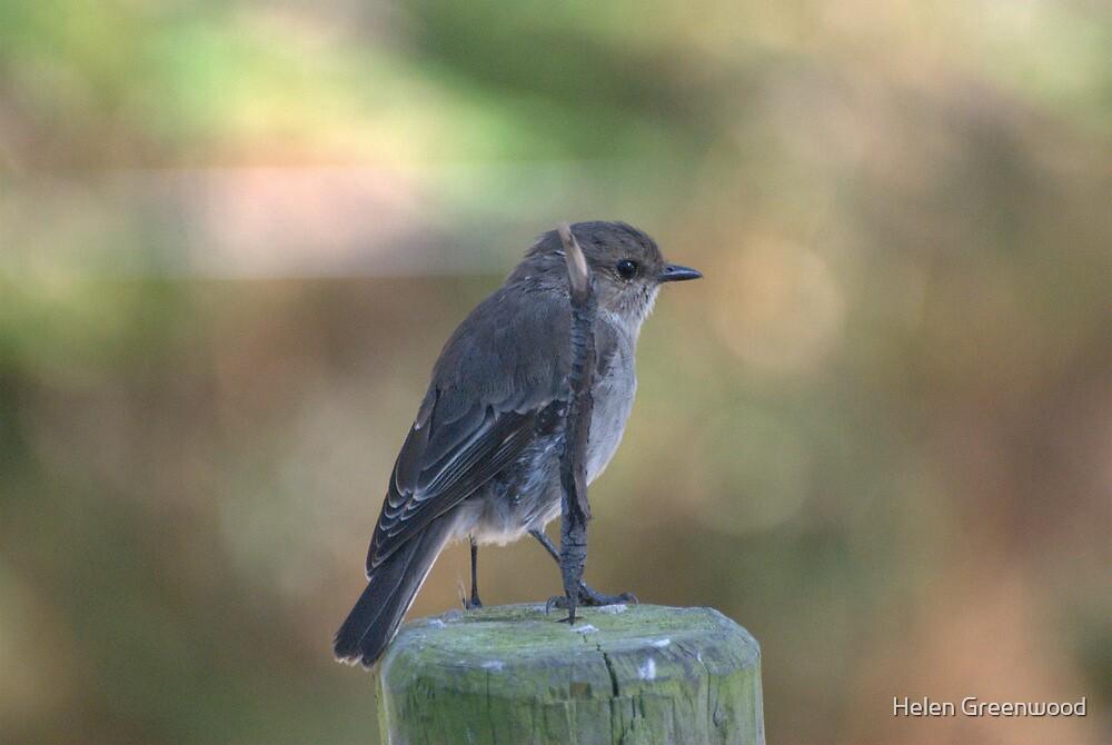 lbb - little brown bird by Helen Greenwood