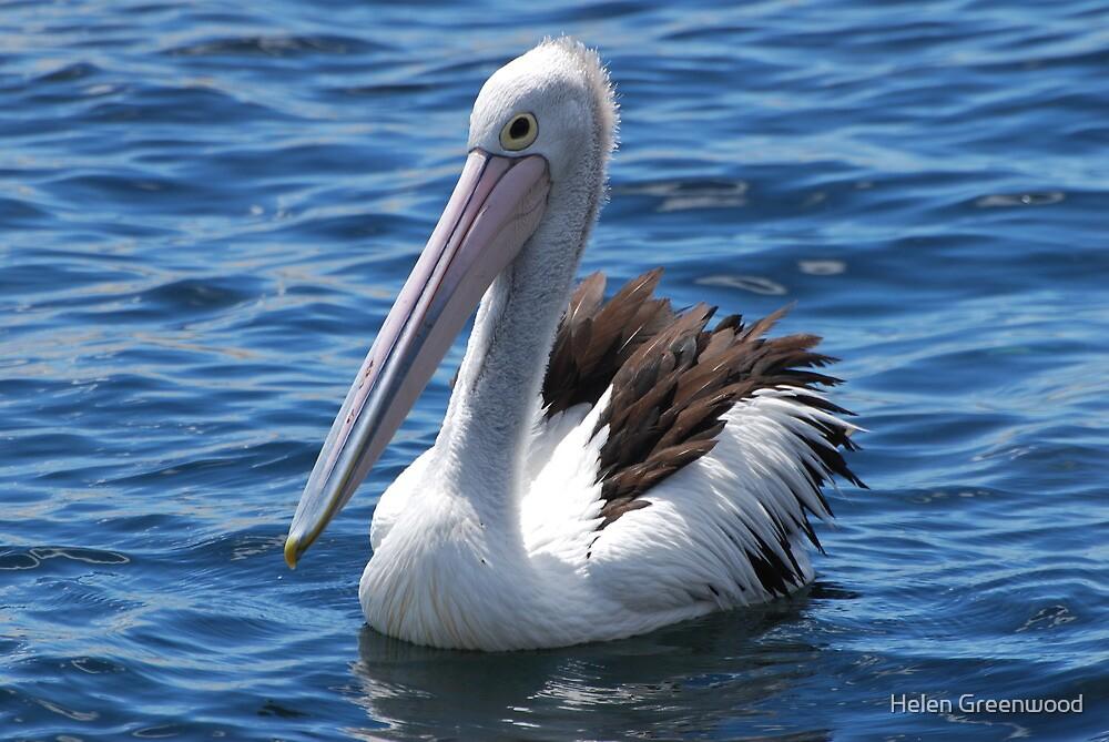 Pelican by Helen Greenwood