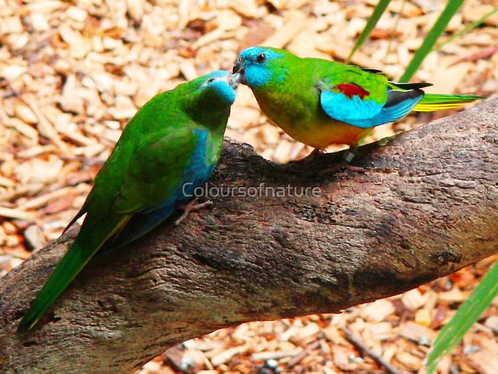 Baby Love by Coloursofnature