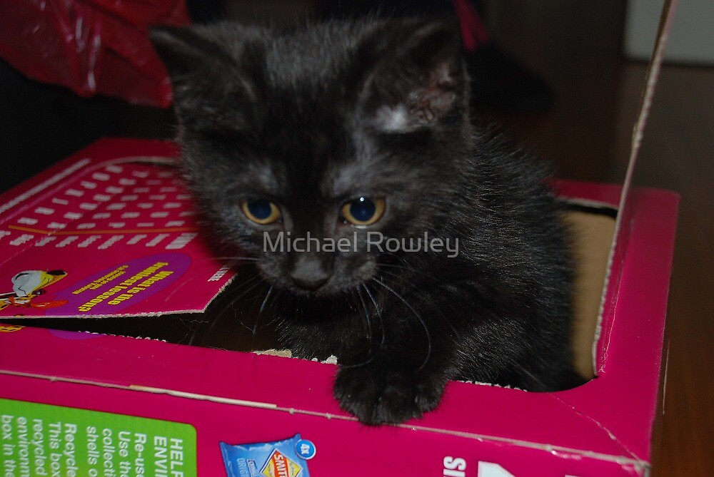 Puss in a box by Michael Rowley