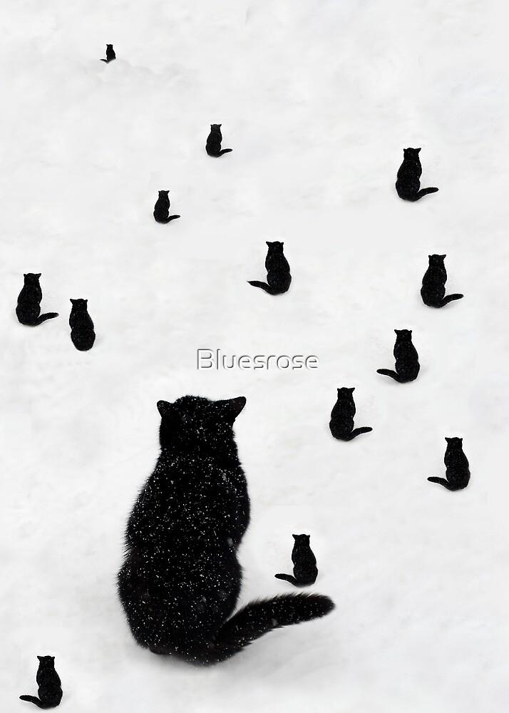 Observing by Bluesrose
