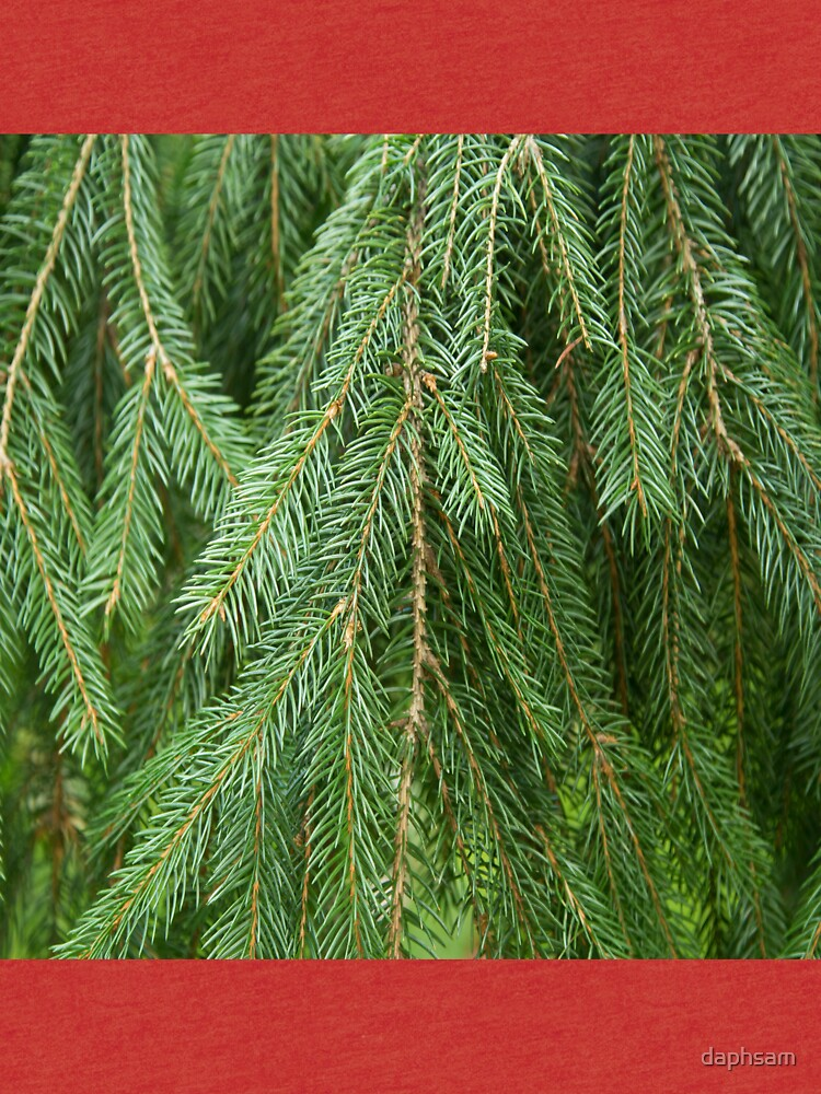Pine Tree Closeup by daphsam