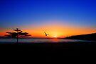Easts' Beach, Kiama. by Andy Newman