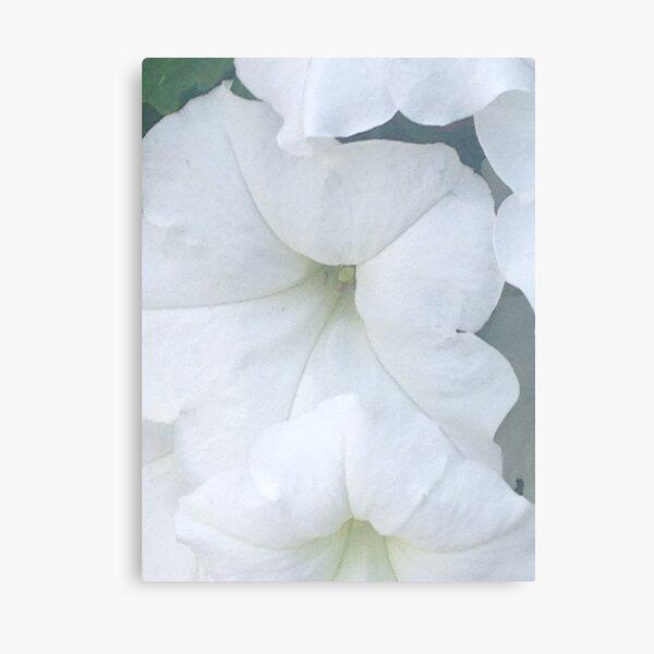 White Petunias 2 Canvas Print