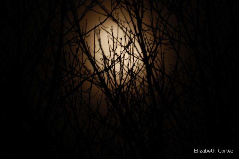Misty Moon by Elizabeth  Cortez