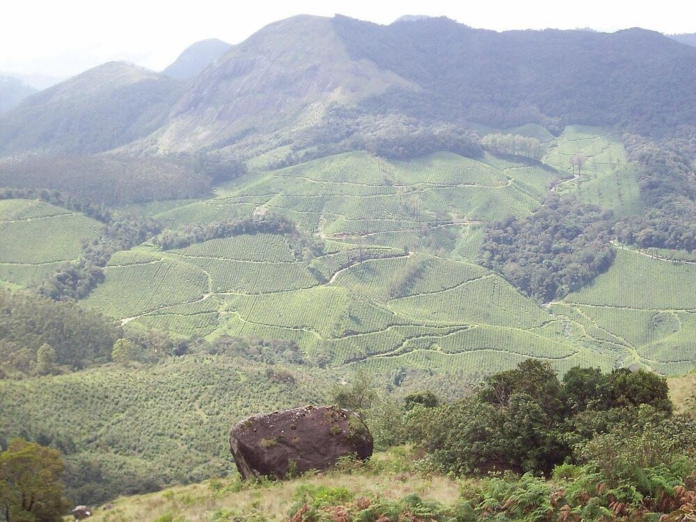 Green valley by shandar26