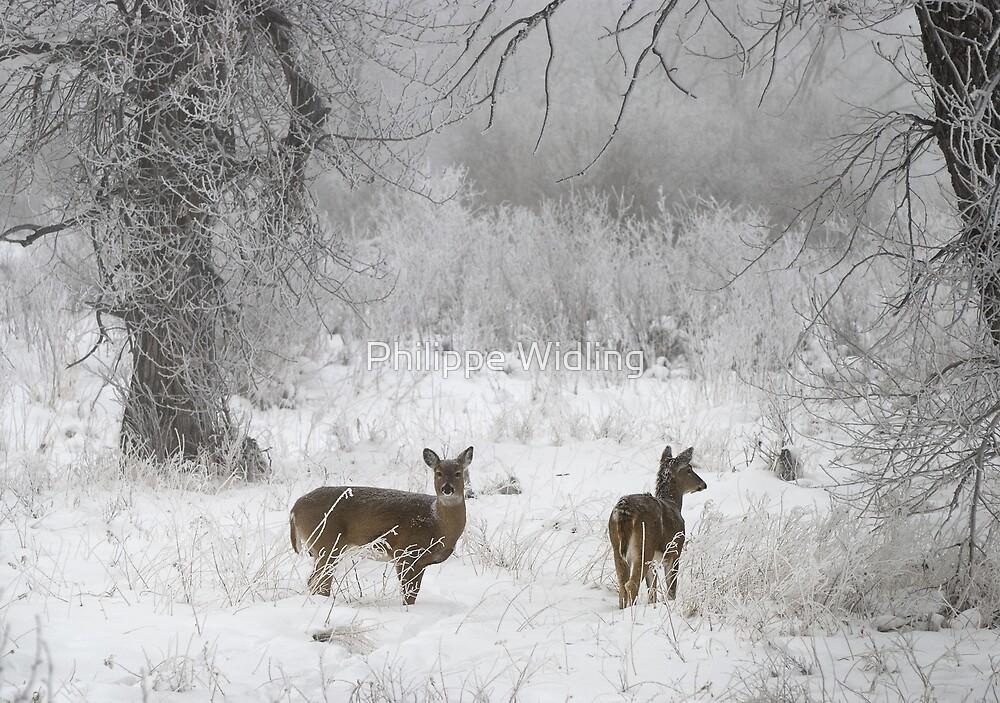 Deer in snow by Philippe Widling
