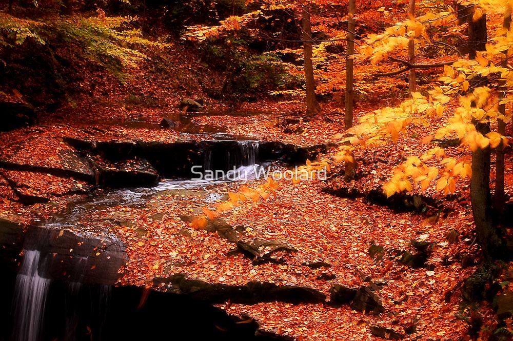 Autumn Falls by Sandy Woolard
