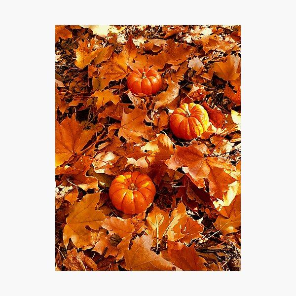Three Mini Pumpkins Photographic Print