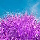 Palmetto Tree in Infrared by Adam Nixon