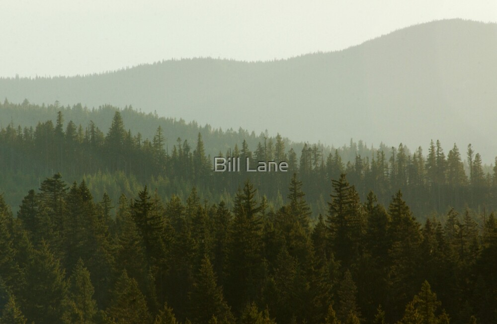 Shades of Green by Bill Lane