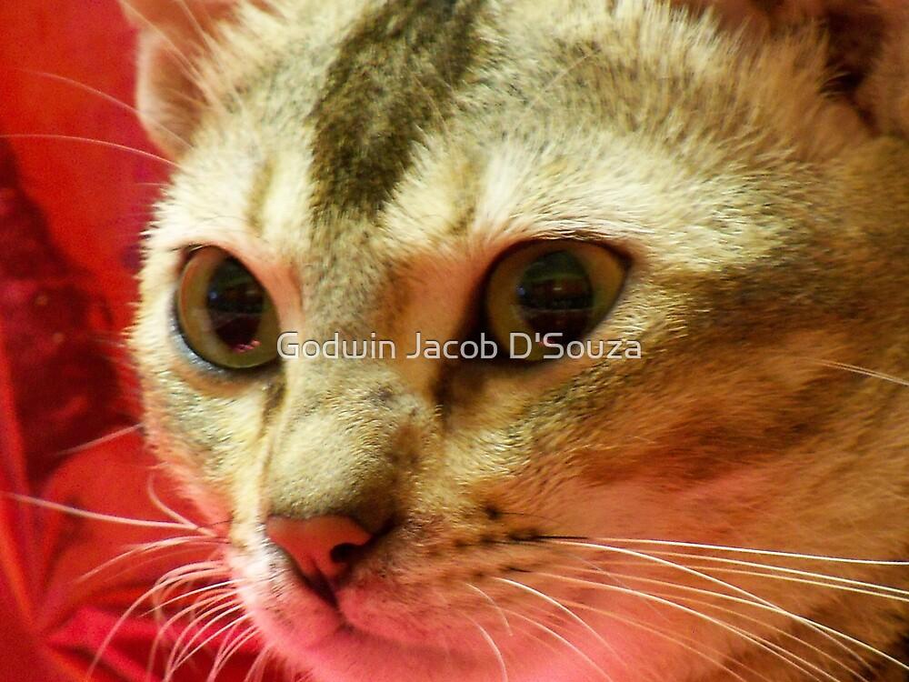 Lilly the cat by Godwin Jacob D'Souza