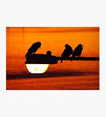 early morning streetlight with rooks Photographic Print