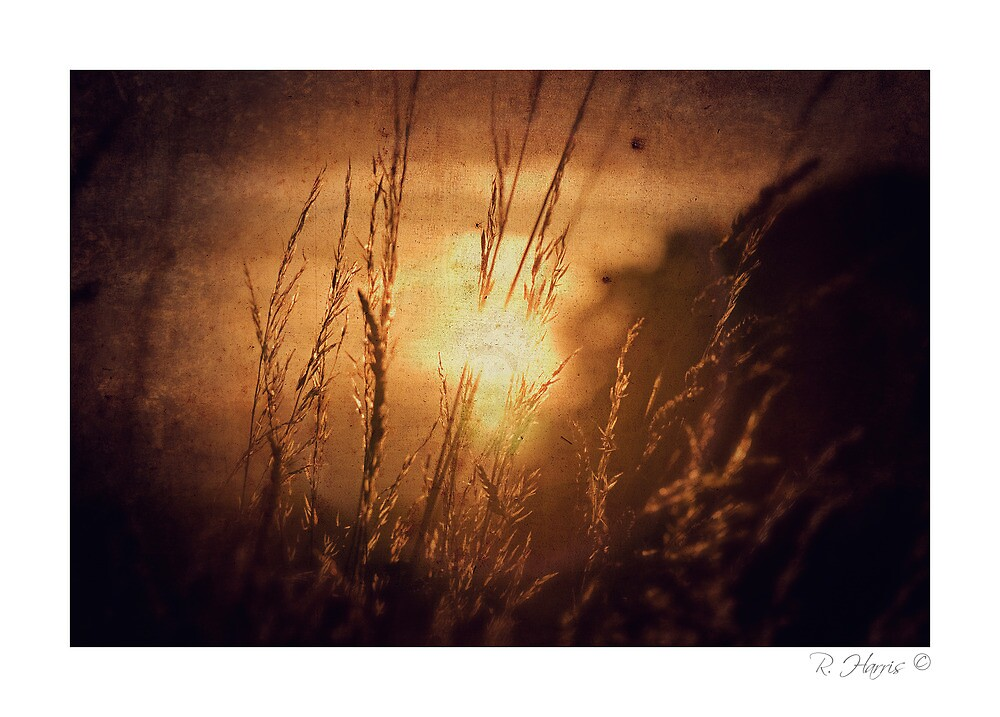 Fresh Air, forgotten - Homer, nr Much Wenlock by rharris-images