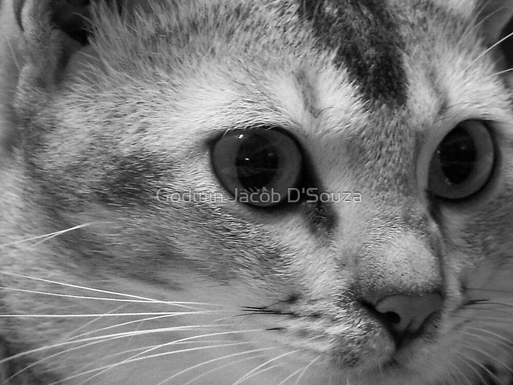 Lilly The Cat 2 by Godwin Jacob D'Souza