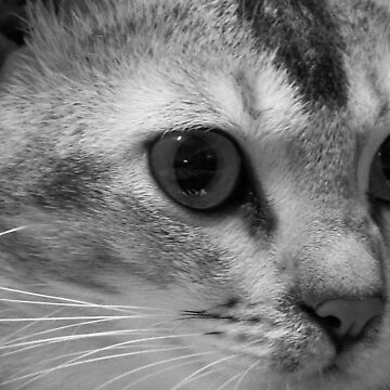 Lilly The Cat 2 by Godwin