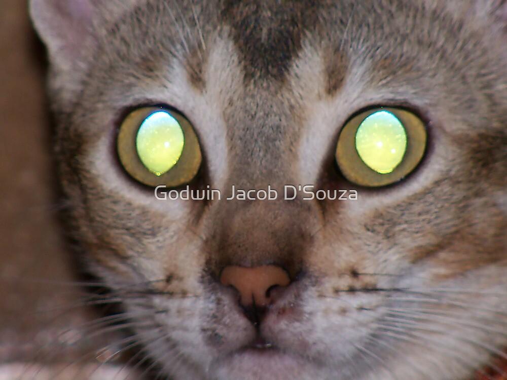 Tiger Look by Godwin Jacob D'Souza
