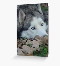 Leaves and Fall Husky Season Greeting Card