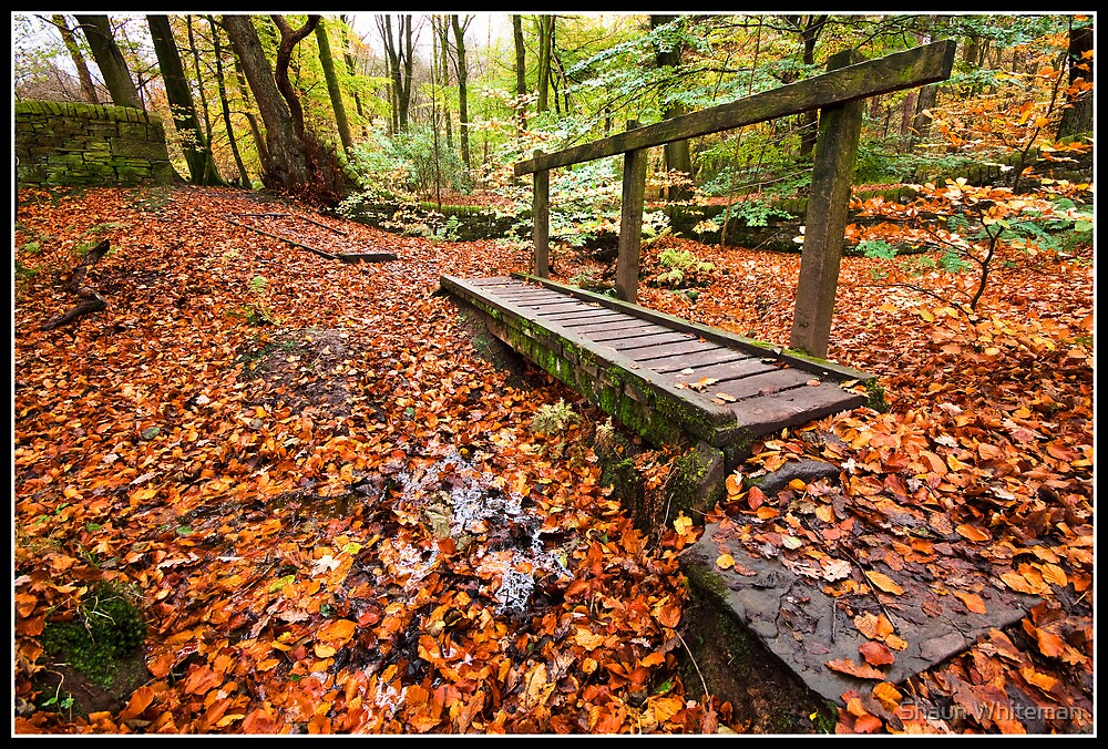 Little bridge over a river of leaves by Shaun Whiteman