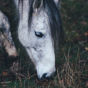 White horse eating grass by franceslewis